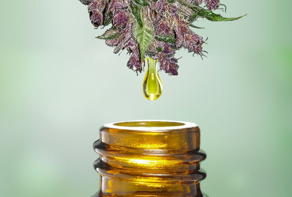 What is the Connection between Cannabis and Essential Oils?